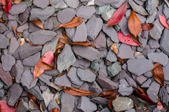 Leafs on rocks. Autumn leafs on black backyard decorative rocks Royalty Free Stock Photography