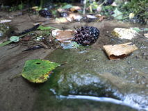 Leafs and rocks into the water. Last teambuilding pause in the river Royalty Free Stock Photo