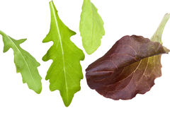 Leafs of salads isolated on white Royalty Free Stock Photos