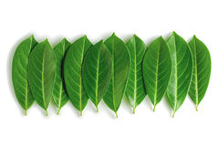 Leafs sequence. Green leafs series isolated over white background royalty free stock photo