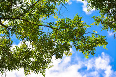 Leafs and sky Royalty Free Stock Photos