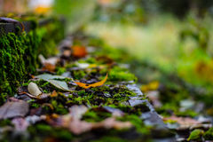 Leafs on the steps. Autumn background and colorful green moss in focus with leafs Stock Image
