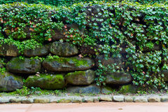 Leafs and stone wall Royalty Free Stock Photo