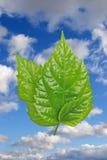 leafs tre Arkivbilder