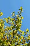 Leafs on tree Stock Photo