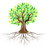 Leafs tree with roots vector illustration
