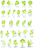LEAFS- vector stock illustration