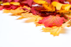 Leafs on white background Stock Images