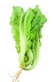 leafsenap Fotografering för Bildbyråer