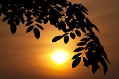 leafsilhouette Royaltyfri Bild