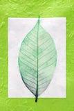 leafskelett Fotografering för Bildbyråer