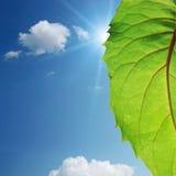 leafsky för blå green fotografering för bildbyråer