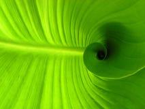 leafspiral Royaltyfria Foton