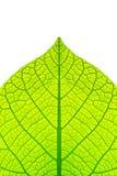leafstruktur Royaltyfri Foto