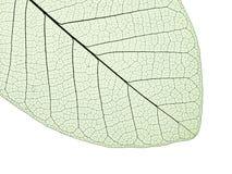 leafstruktur Arkivfoton