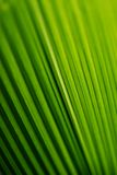 leafstruktur royaltyfria foton