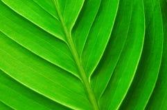 leafstruktur Royaltyfri Bild