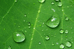 Leaft and the drop. The leaft with raindrop on it Royalty Free Stock Photography