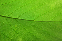 leaftextur Fotografering för Bildbyråer