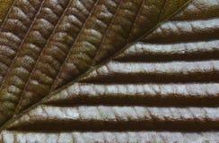 leaftextur Royaltyfria Bilder