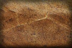 leaftobak Arkivfoto