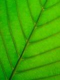 leafundersida Royaltyfria Bilder