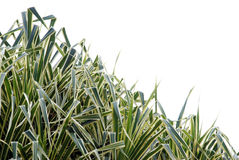 leafväxt Arkivbild