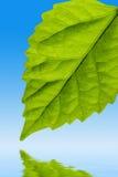 leafvatten Fotografering för Bildbyråer