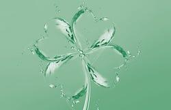 leafvatten för växt av släkten Trifolium fyra Royaltyfria Foton