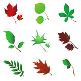 leafvektor vektor illustrationer