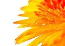 leafwaterdrop royaltyfri fotografi