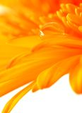 leafwaterdrop arkivfoto