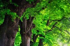Leafy Stock Image