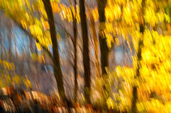 Leafy abstract Royalty Free Stock Photography