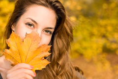 Leafy autumn beauty Royalty Free Stock Photography