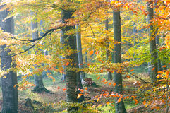 Leafy autumn forest Stock Images