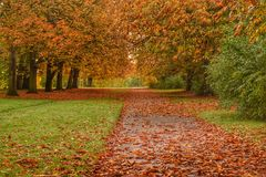 Leafy autumn pathway Royalty Free Stock Photo
