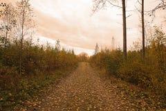 Leafy autumn road Stock Photos