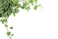 Leafy background Stock Photo