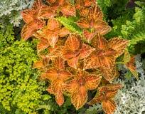 Leafy background Royalty Free Stock Photos