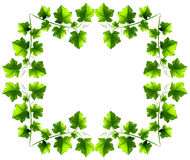 Leafy border design Stock Images