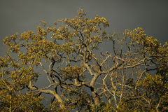 Leafy branches on the background of a stormy sky Royalty Free Stock Images