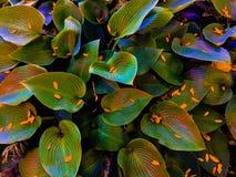 Leafy bush royalty free stock images