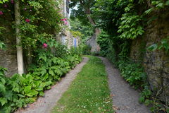 Leafy Country Lane. Scenic Summertime View of a Tranquil Green Leafy Country Lane Stock Image