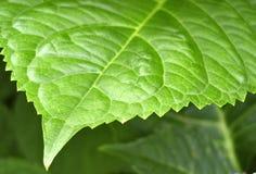 Leafy edge Stock Image
