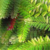 Leafy forest Stock Photo