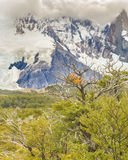 Leafy Forest against Snowy Mountains Patagonia Argentina. Leafy forest against snowy andes mountains in one of trekking roads at El Chalten, Patagonia, Argentina Stock Photos