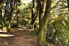 Leafy forest with colossal rock formations and trees in Sintra Mountains. Beautiful leafy forest with colossal rock formations and majestic trees with soft sun stock image