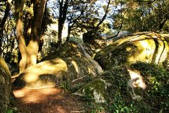 Leafy forest with colossal rock formations and trees in Sintra Mountains. Beautiful leafy forest with colossal rock formations and majestic trees with soft sun stock photo