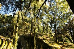 Leafy forest with colossal rock formations and trees in Sintra Mountains. Beautiful leafy forest with colossal rock formations and majestic trees with soft sun royalty free stock image